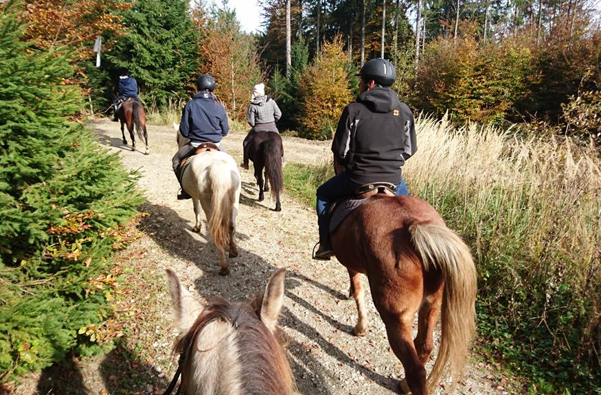 horses and riding in austria